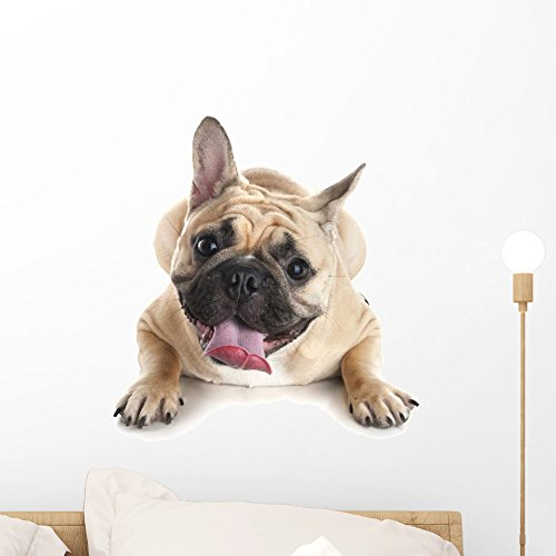 Wallmonkeys French Bulldog White Wall Decal Peel and Stick Graphic (18 in H x 14 in W) WM359392