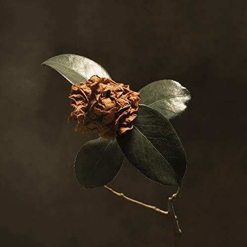 Young Sick Camellia [Vinyl LP]
