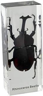 Rhinoceros Beetle Large Rectangular Paperweight (4.3