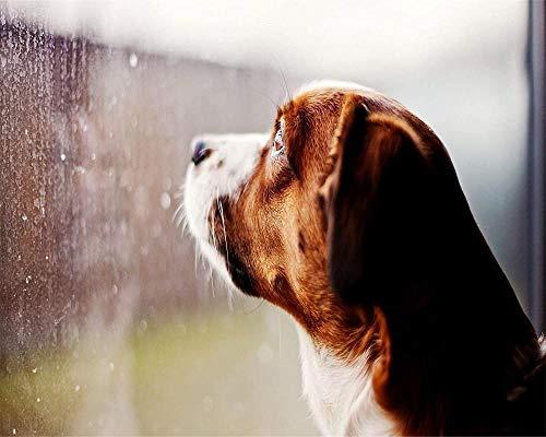 Houten puzzel 1000 stukjes,Cadeau educatief speelgoed voor kinderen en volwassenen kijken naar de regendruppels hond glazen raam puzzel