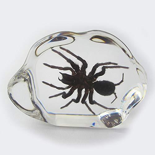 VSander Harz Epoxy Schmuck Acryl Tisch Dekoration Konferenz Geschenk Naturharz Dekoration (Color : Black-haired Spider)