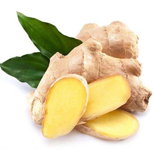 100pcs Ginger Graines Gingembre Zingiber Seed 4 Saisons jardin Flore Ferme Graine