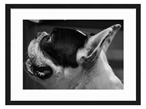 Wood Framed Canvas Artwork Home Decore Wall Art (Black White 20x14 inch) - French Bulldog Frenchie Dog Pet Boston Terrier