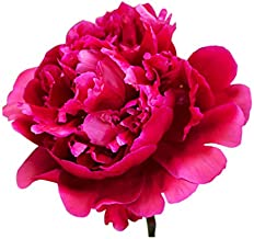 Best karl rosenfield peony for sale Reviews