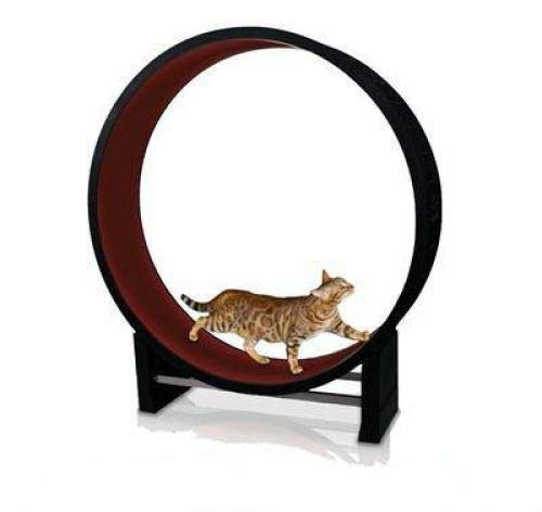 Katzenlaufrad - Trainingsgerät und Spielzeug für ihre Katzen