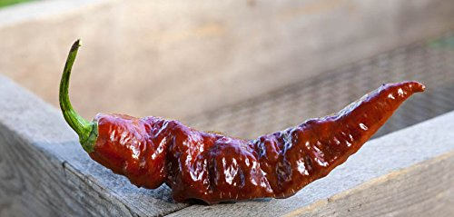 Chocolate Bhut Jolokia Heirloom Ghost Pepper Premium Seed Packet +...