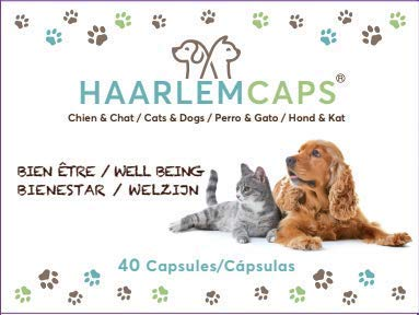 phyto véto Huile de Haarlem Chien Chat