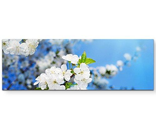 Paul Sinus Art Leinwandbilder   Bilder Leinwand 120x40cm Kirschblüten im Frühling – Fotografie