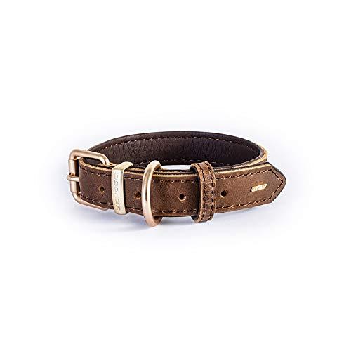 EzyDog Oxford Hundehalsband Leder- Premium Lederhalsband - Hunde Halsband für Kleine und Große Hunde, Naturleder, Verstellbares, Gepolstertes (S, Braun)