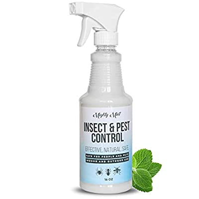 peppermint oil, End of 'Related searches' list