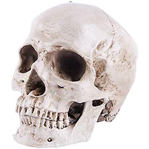 WANGIRL Totenkopf Modell Menschliches Schädelmodell Lebensgröße für Anatomie 1: 1 Menschlicher Schädel Replikat Harz Medizinische Anatomische Verfolgung Lehren Skelett Statue Halloween