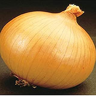 Savannah Sweet,( onions Seed),Onion,Allium cepa.Plant,Spring,Summer or Fall (1000)