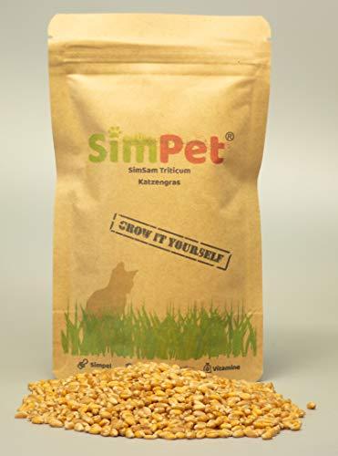 SimSam Soft Katzengras SimSam Softgras Samen aus Deutschland hohe Keimfähigkeit.