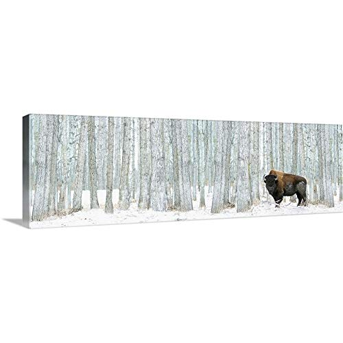 Bison Standing in Snow Among Poplar Trees in Elk Island National Park Alberta, Canada Canvas Wall.