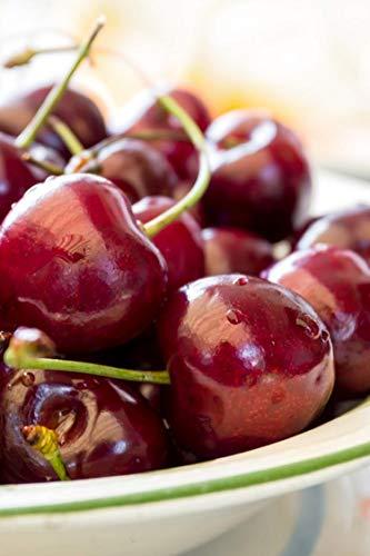 Albero di Ciliegio pianta di ciliegia varietà Ferrovia in vaso Età 2 anni pianta vera di ciliegio in venduta da eGarden.store