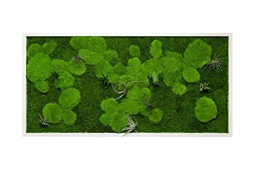 Pflanzenbild kaufen Moosbild mit lebenden Pflanzen Wandbild Moos Wanddeko Poster rechteckig (Weiß, 110x55 cm)