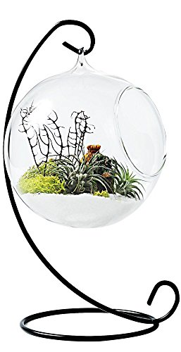 Mkono Clear Glass Vase Hanging Plant Terrarium with Black Metal Stand Tabletop Display