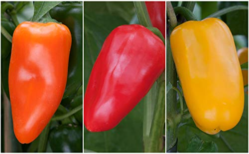 Sweet Pepper F1 'Snack Mix' x 3 Plug Plants for Potting on by Growtanical