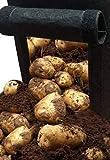 GREEN AT HOME: Kit de 2 Sacos de Cultivo de Fieltro para Patatas, Tomates, Plantas y Flores de Jardín + 3 Amuletos Árbol de la Vida. Naturaleza en tu Hogar.