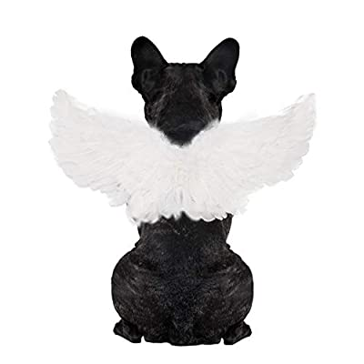 WeeH Pet Halloween Costume Cosplay Angel Devil Black White Wing for Dog Cat Rabbit Piggy - Funny Gift at Halloween Party Anime Theme Birthday Christmas (White, Small)