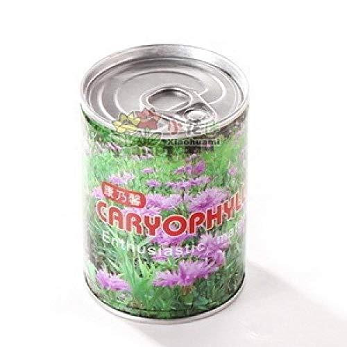 500 micro-paysage mini mignon en pot petit bonsaï bureau bureau plantes écologiques graines-Carnation_A box