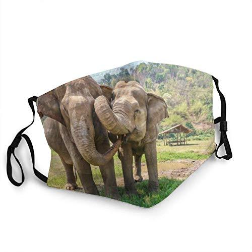 Sheho Wiederverwendbarer Gesichts-Mund-Schutzschild Liebevolles Tierverhalten, wenn Sich Zwei Erwachsene weibliche asiatische Elefanten mit ihren Stämmen und Gesichtern berühren. Gesichtsschutz