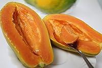 沖縄県産フルーツ 沖縄産フルーツパパイヤ約2kg