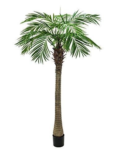 EUROPALMS 82510721 Phoenix Palm Tree Luxor, 210 cm