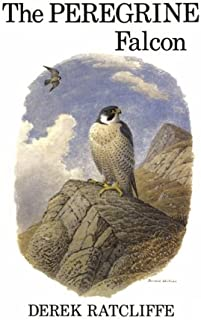 The Peregrine Falcon, First Edition
