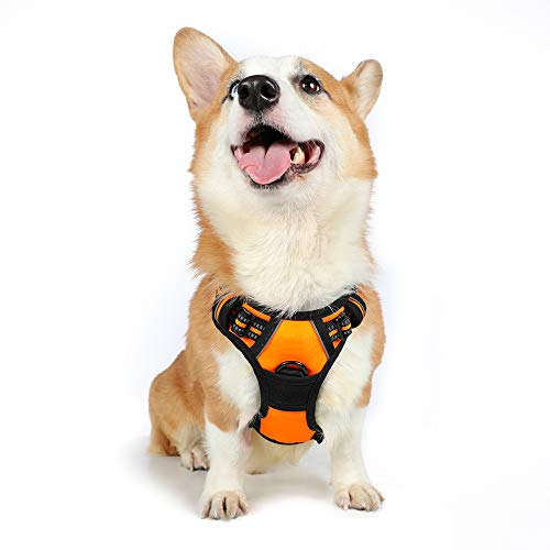 "rabbitgoo Dog Harness,No-Pull Pet Harness with 2 Leash Clips,Adjustable Soft Padded Dog Vest,Reflective No-Choke Pet Oxford Vest with Easy Control Handle for Medium Dogs,Orange (M, Chest 19.1-29.3"")"