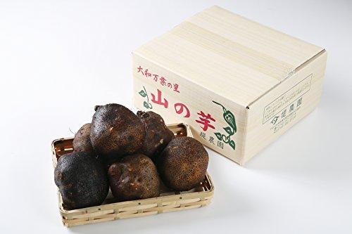 ヤマノイモ 栽培時 農薬 化学肥料 不使用 大和万葉の里 堤さんの 山の芋 5~8個約2.5kg 奈良 産地直送