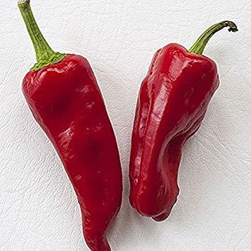 Keimfutter: Aleppo Chile Hot Pepper Premium-Samen-Paket + Mehr