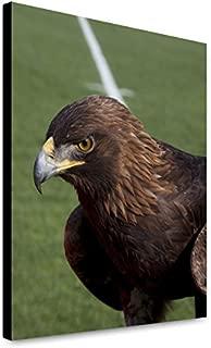 ClassicPix Canvas Print 16x20: The Golden Eagle That Flys at The Auburn University's.