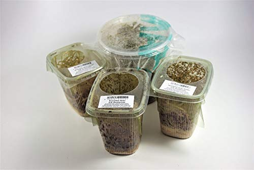 terra2go Drosophila Mix und Erbsenblattläuse - 4er Set Futtertiere