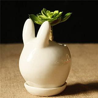Global Brands Online Mini Forma de Conejo de Cerã¡Mica Plantas suculentas Flor Maceta de Jardãn Bricolaje Planta en Maceta Decoraciã³n Maceta