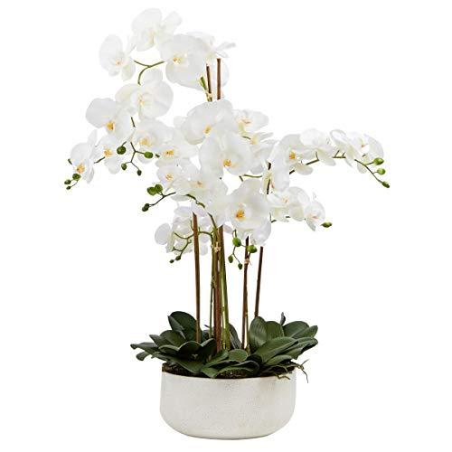 Pureday Pianta Artificiale Vaso Orchidea Reale