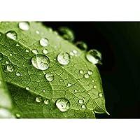 lovedomi 8x6ft シンプルなデザインスタイル緑の葉と水滴詳細写真背景写真スタジオブース背景家族休暇誕生日パーティー写真スタジオ写真ビニール素材