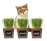 Cat Grass Growing Kit with 3 Mini Wooden Planters, Certified Organic Seeds and Soil. Easy to Grow Indoor Kit Your Pets Will Love.