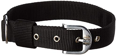 DOGISTA PET PRODUCTS Dog PP Collar 1.25, Large