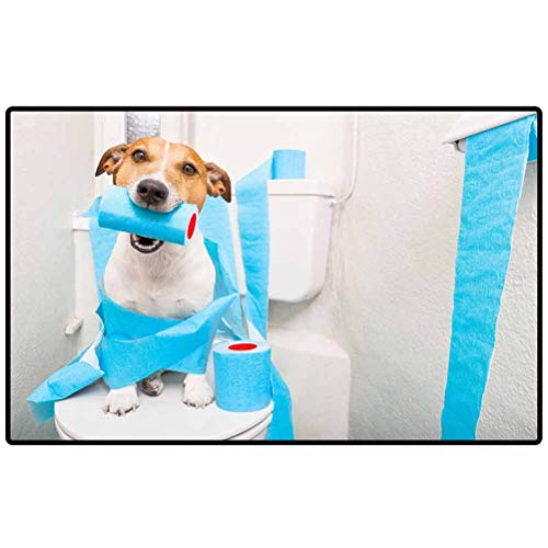 Bathroom Mats jack russell terrier on a toilet seat with digestion problems or constipation looking very sad and toilet paper rolls one roll in mouth_59021181 Area Rug for Home Bedroom Garden