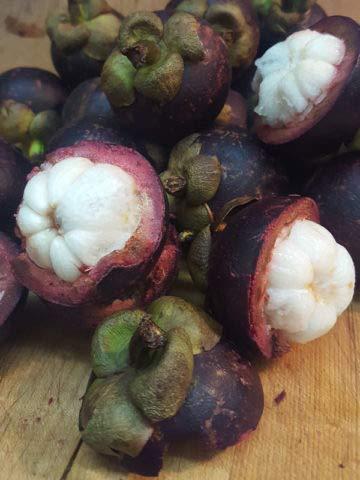 Bloom Green Co. 50 piezas de deliciosas plantas de mangostn reina rica en nutrientes de frutas tropicales Ãrbol de flores perennes Bonsai orgnico para jardn de casa: 5