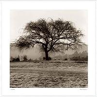 ポスター アラン ブラウステイン Willow Tree 額装品 アルミ製ハイグレードフレーム(ホワイト)