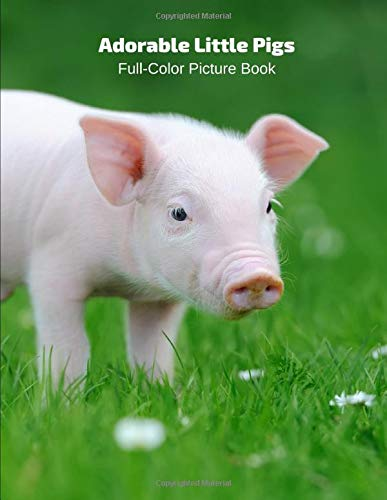 Adorable Little Pigs Full-Color Picture Book: Animals Photography Book