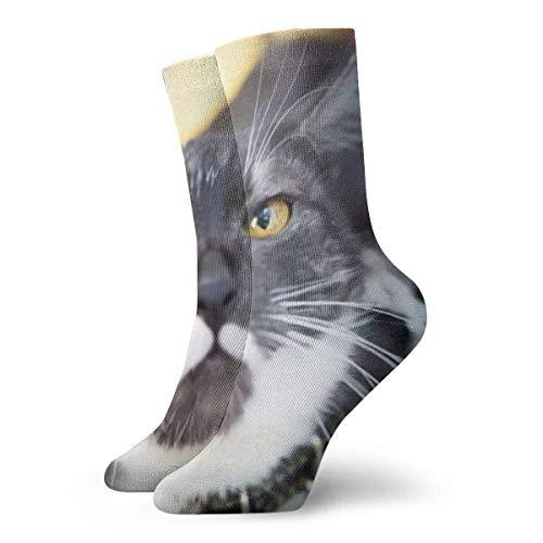 Calcetines unisex, Un gato en un banco al aire libre en otoño, Calcetines suaves estampados Calcetines deportivos para todas las estaciones Calcetines cortos, Longitud (30 cm)