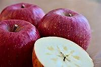 サンふじ 贈答用 3kg(7-10玉)りんごの王様 蜜入り大玉 甘味 酸味 歯ごたえ 太陽をたっぷり浴びた 信州りんご