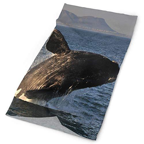 CVDGSAD Stirnband EIN großartiges Ziel für Walbeobachtung und Ökotourismus. Outdoor Schal Maske Nackenschutz Head Wrap Schweißband Sport Headwe