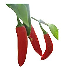 Serrano-Tampiqueno Chili