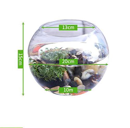 TANERDD Transparenter Kleiner Goldfischbehälter Sichtglas Aquarium Runder großer Behälter Mini kreative Form Hauptdekoration mit Wassergras,20cm