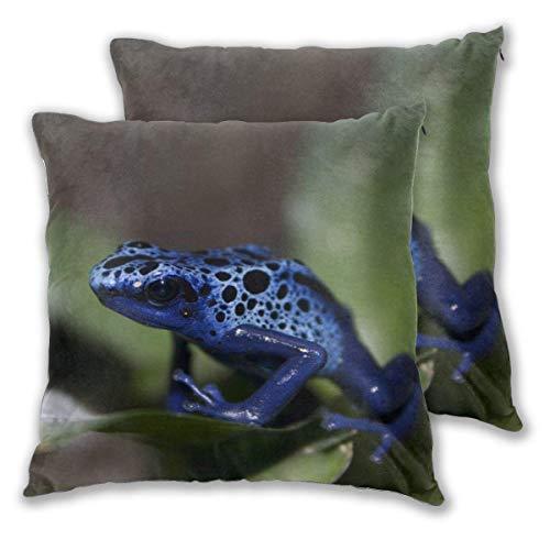 AEMAPE Fundas de Almohada cuadradas Suaves, Paquete de 2 Fundas de cojín Decorativas de Blue Frog, Fundas de Almohada para sofá, Dormitorio, Coche, 40 x 40 cm