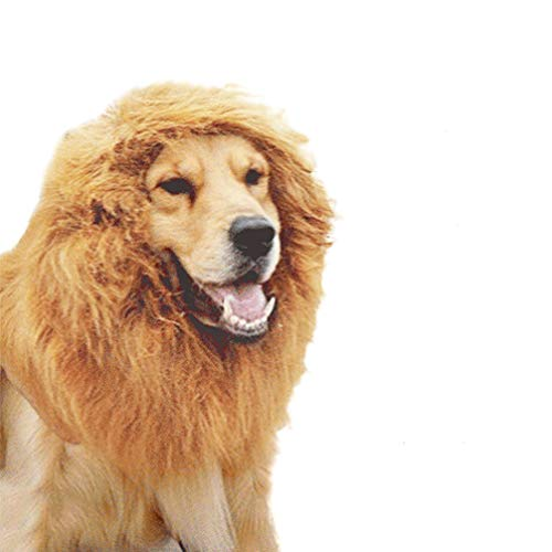 - Hund Löwe Perücke Kostüme